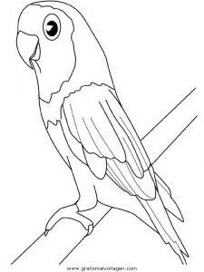 Papageien 09 Gratis Malvorlage In Papageien Tiere Ausmalen