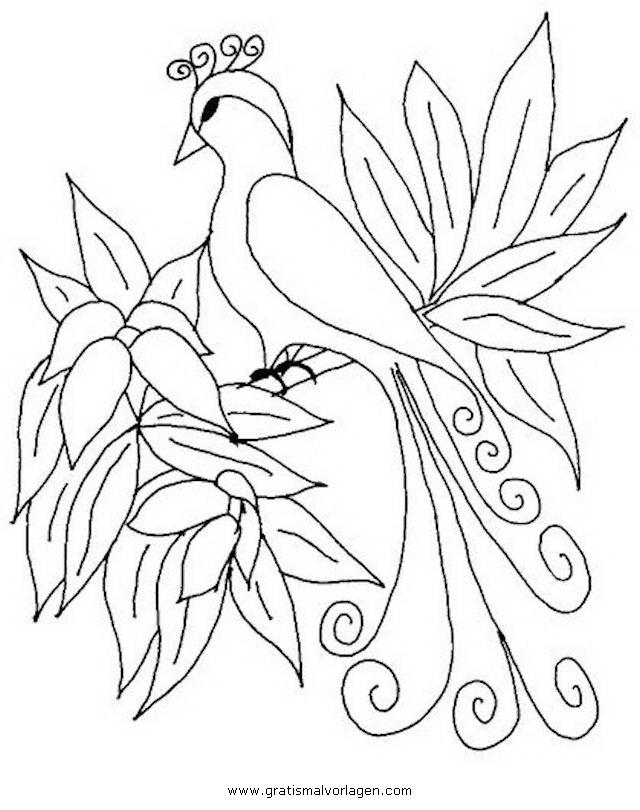 paradiesvogel gratis malvorlage in tiere vögel  ausmalen