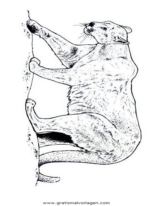 puma 03 gratis malvorlage in tiere tiger  ausmalen