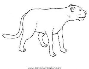 Puma 04 Gratis Malvorlage In Tiere Tiger Ausmalen