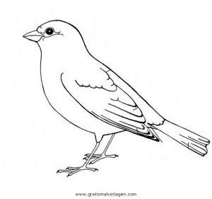 rotkehlchen gratis malvorlage in tiere, vögel - ausmalen