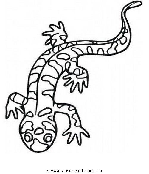 salamander 03 gratis malvorlage in tiere verschiedene