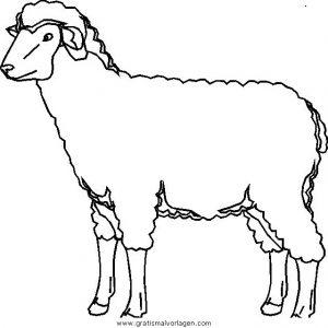 Schafe 04 Gratis Malvorlage In Schafe Tiere Ausmalen