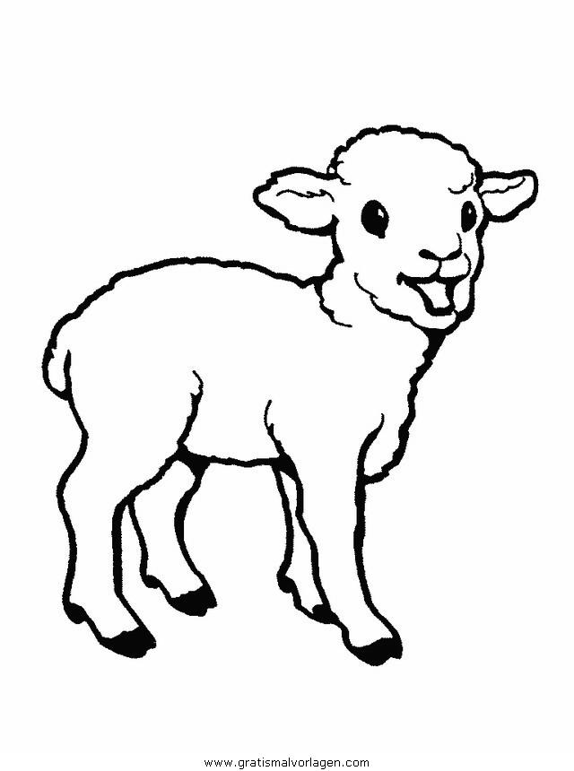 schafe 07 gratis Malvorlage in Schafe, Tiere - ausmalen