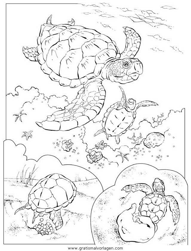 schildkroten 32 gratis malvorlage in schildkröten tiere