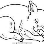 Schweine Malvorlagen Zum Ausmalen Fur Kinder