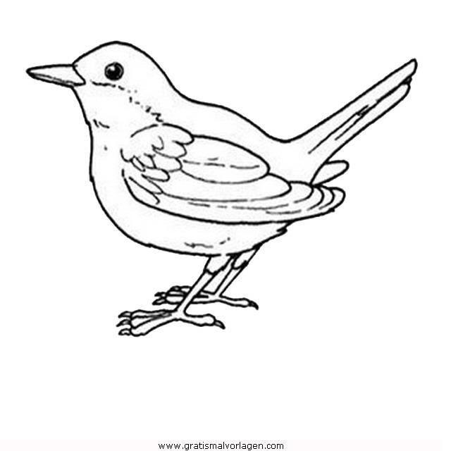 singvogel 02 gratis malvorlage in tiere vögel  ausmalen