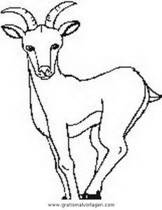 Steinbock 2 Gratis Malvorlage In Schafe Tiere Ausmalen