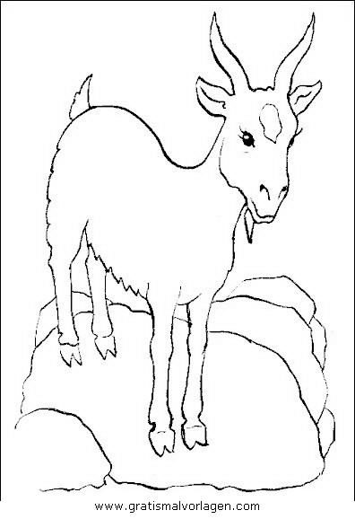 Steinbock 3 Gratis Malvorlage In Schafe Tiere Ausmalen