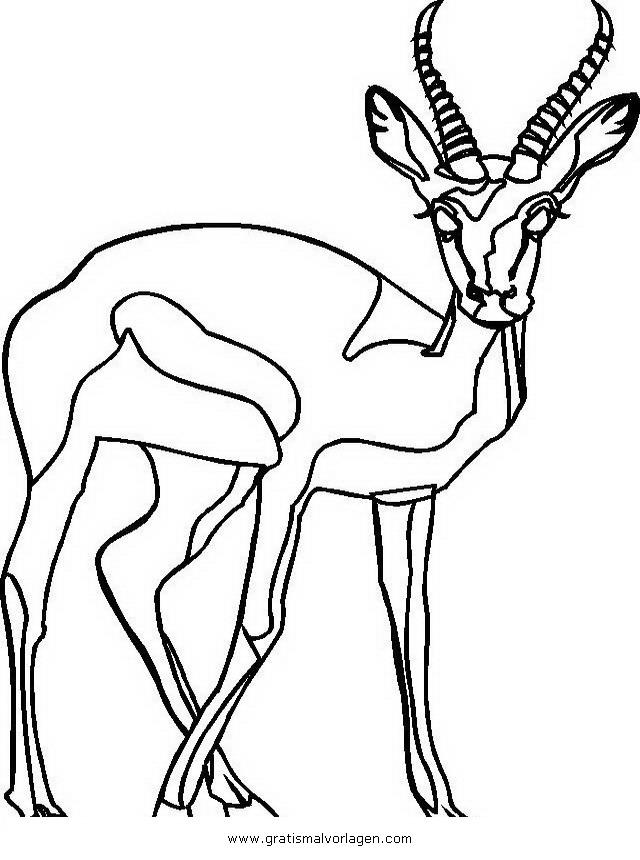 steinbock 5 gratis malvorlage in schafe tiere  ausmalen