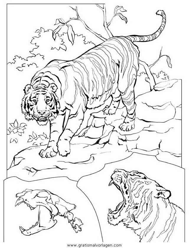 tiger 04 gratis malvorlage in tiere tiger  ausmalen