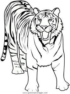 Tiger 07 Gratis Malvorlage In Tiere Tiger Ausmalen