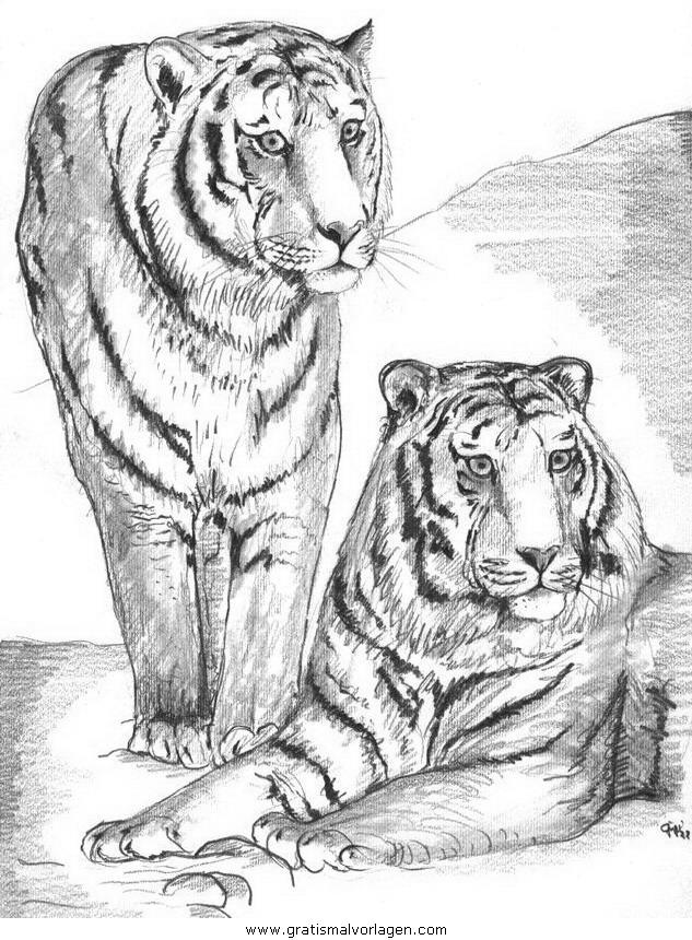 tiger 13 gratis malvorlage in tiere tiger  ausmalen