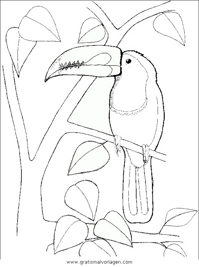 tukan 3 gratis malvorlage in tiere vögel  ausmalen