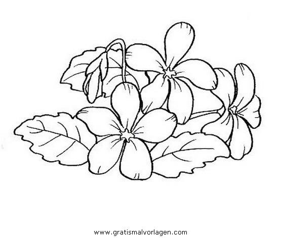 Veilchen 0 Gratis Malvorlage In Blumen Natur Ausmalen