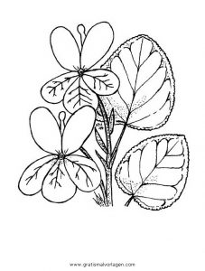 Veilchen 2 Gratis Malvorlage In Blumen Natur Ausmalen