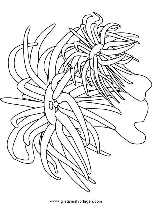 malvorlagen unterwasserpflanzen  coloring and malvorlagan