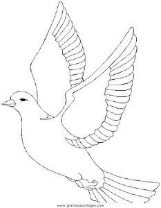 Verschiedene Vogel 031 Gratis Malvorlage In Tiere Vögel Ausmalen