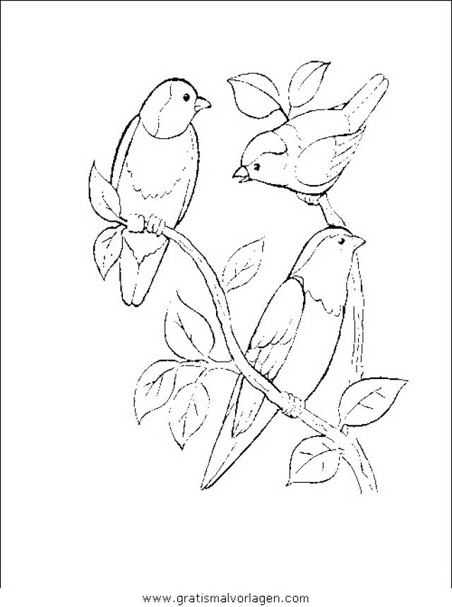 Verschiedene Vogel 051 Gratis Malvorlage In Tiere Vogel Ausmalen