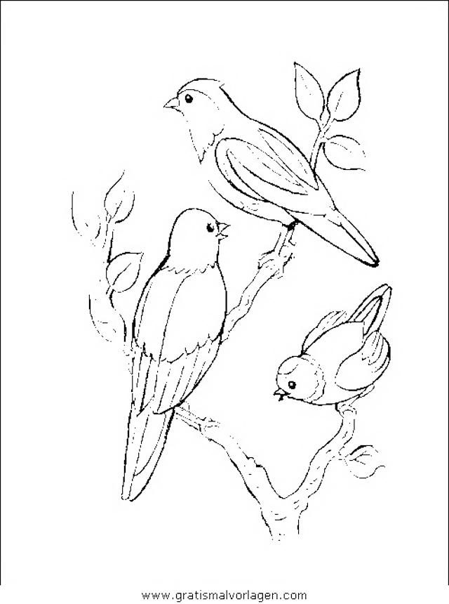 verschiedene vogel 053 gratis malvorlage in tiere vögel