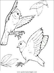 Vogel Malvorlage