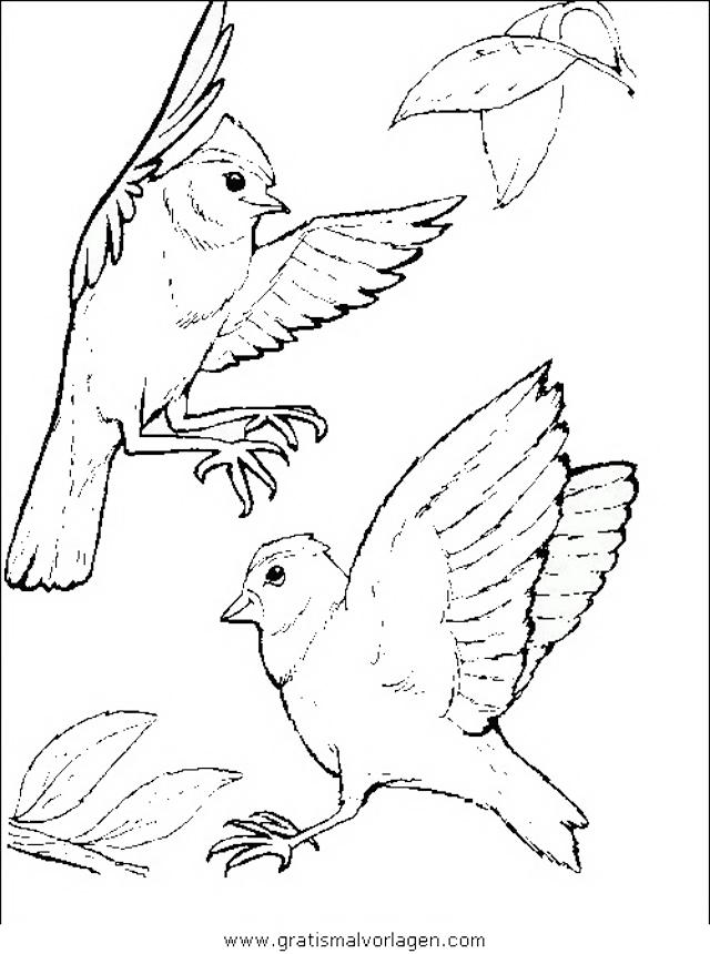 verschiedene vogel 054 gratis malvorlage in tiere vögel