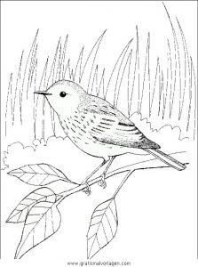 verschiedene vogel 082 gratis malvorlage in tiere, vögel - ausmalen