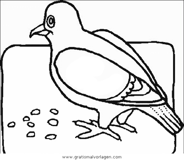 verschiedene vogel 140 gratis malvorlage in tiere vögel