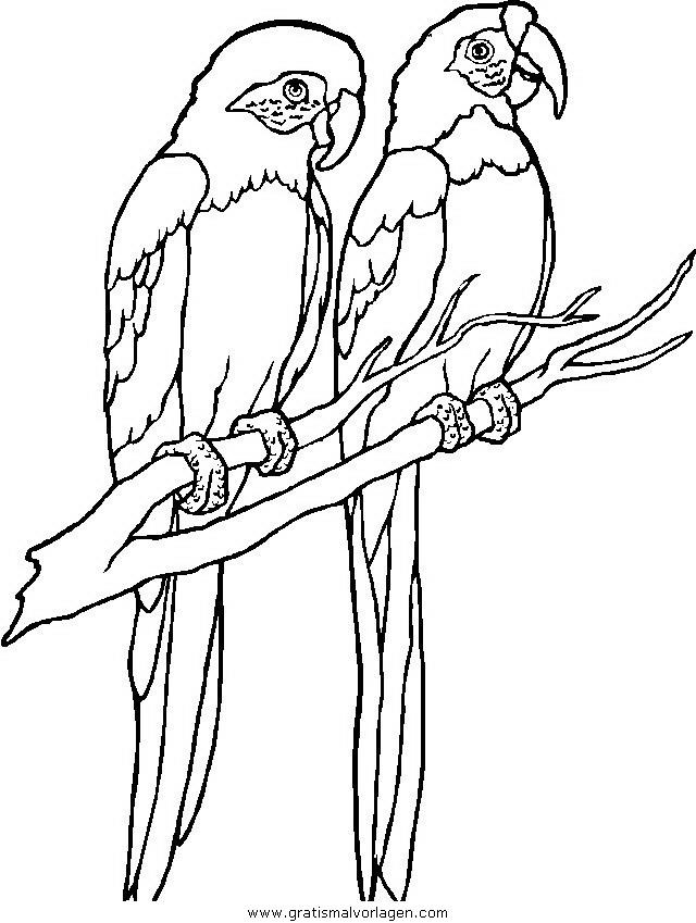 verschiedene vogel 160 gratis malvorlage in tiere vögel