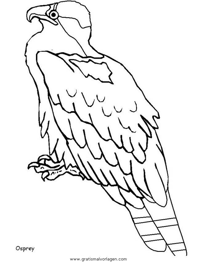 verschiedene vogel 178 gratis Malvorlage in Tiere, Vögel - ausmalen