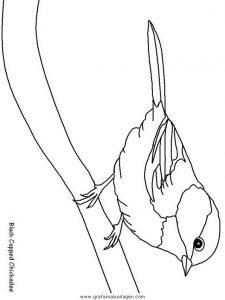 verschiedene vogel 180 gratis malvorlage in tiere, vögel