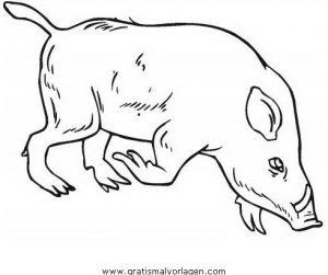 Wildschweine Wildschwein 01 Gratis Malvorlage In Schweine Tiere