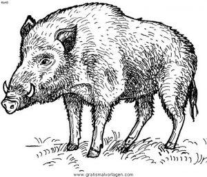 Wildschweine Wildschwein 02 Gratis Malvorlage In Schweine Tiere