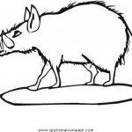 schweine malvorlagen zum ausmalen für kinder