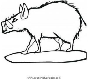 Wildschweine Wildschwein 04 Gratis Malvorlage In Schweine Tiere