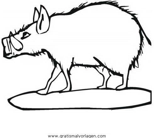 wildschweine wildschwein 04 gratis malvorlage in schweine, tiere - ausmalen