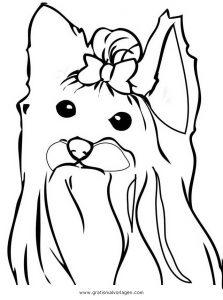 yorkshire terrier 2 gratis malvorlage in hunde, tiere