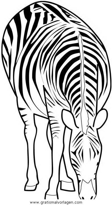 zebras 62 gratis malvorlage in tiere zebras  ausmalen