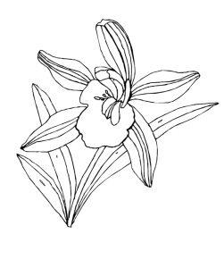 Malvorlage Blumen Blumen_00224
