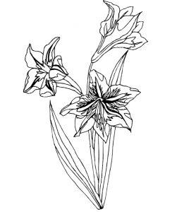 Malvorlage Blumen Blumen_00227