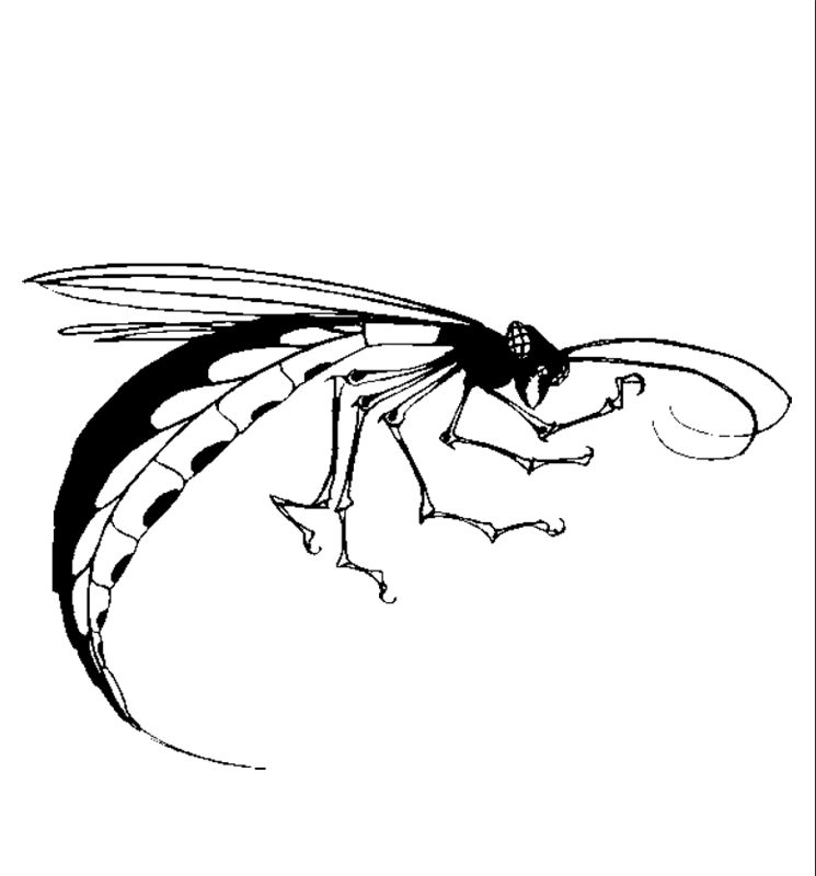 insekten00221 gratis malvorlage in insekten tiere  ausmalen