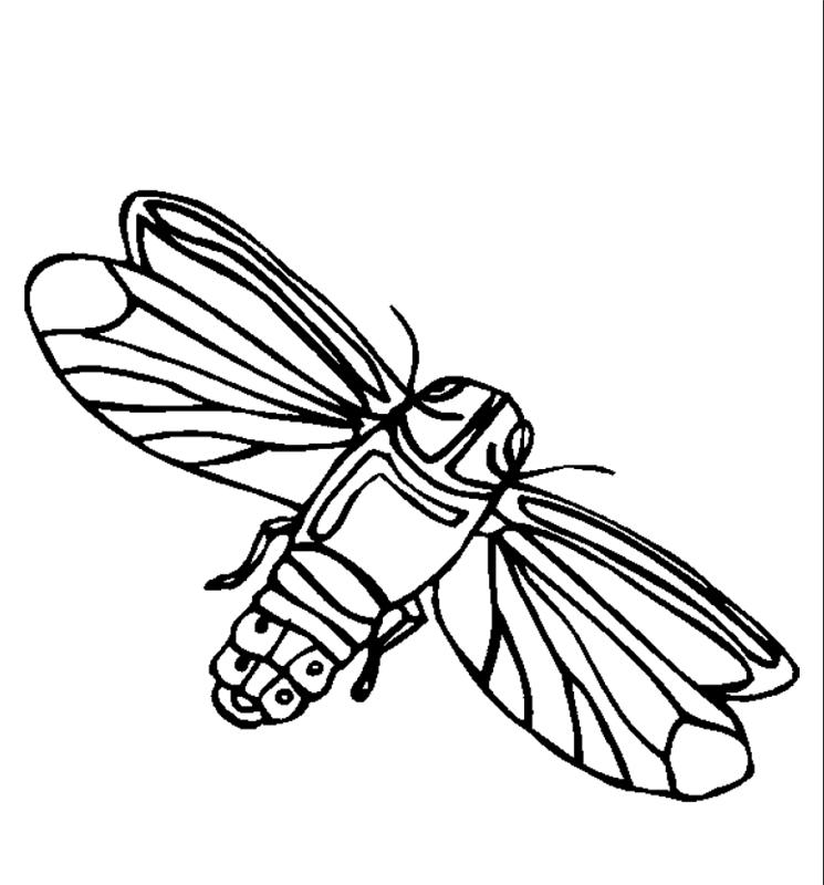 insekten00224 gratis malvorlage in insekten tiere  ausmalen