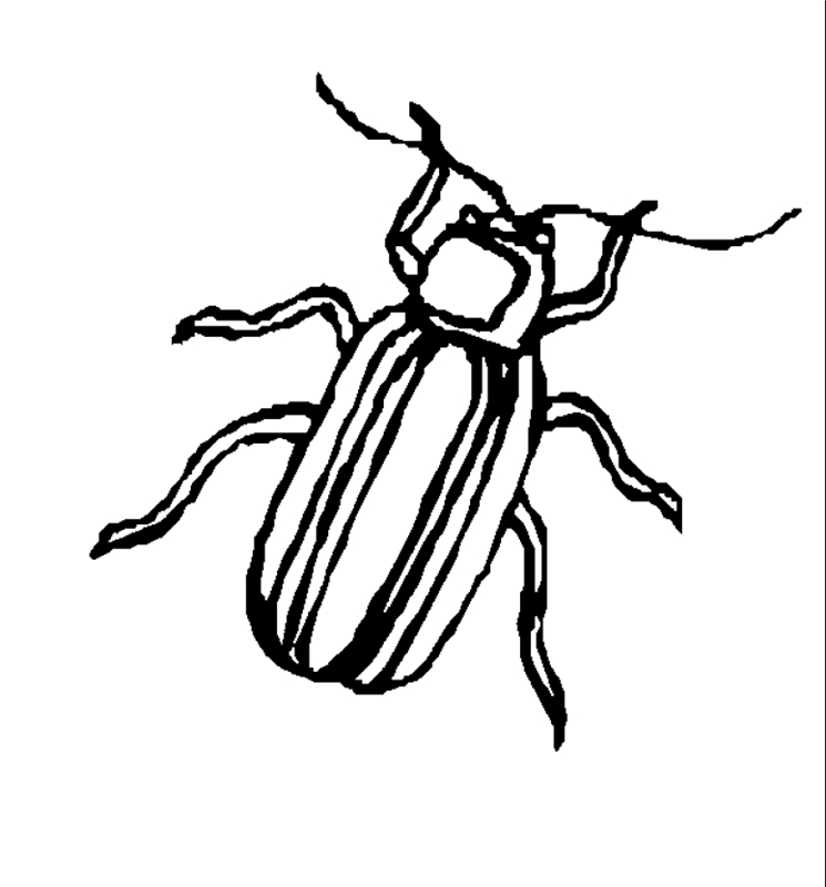 insekten00229 gratis malvorlage in insekten tiere  ausmalen