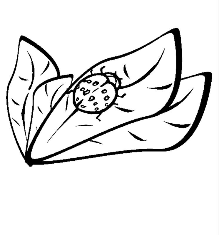 insekten_00243 gratis malvorlage in insekten, tiere - ausmalen