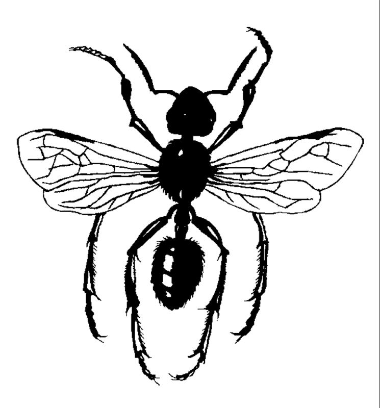 insekten00253 gratis malvorlage in insekten tiere  ausmalen