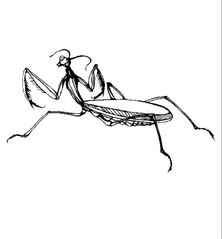 insekten00256 gratis malvorlage in insekten tiere  ausmalen