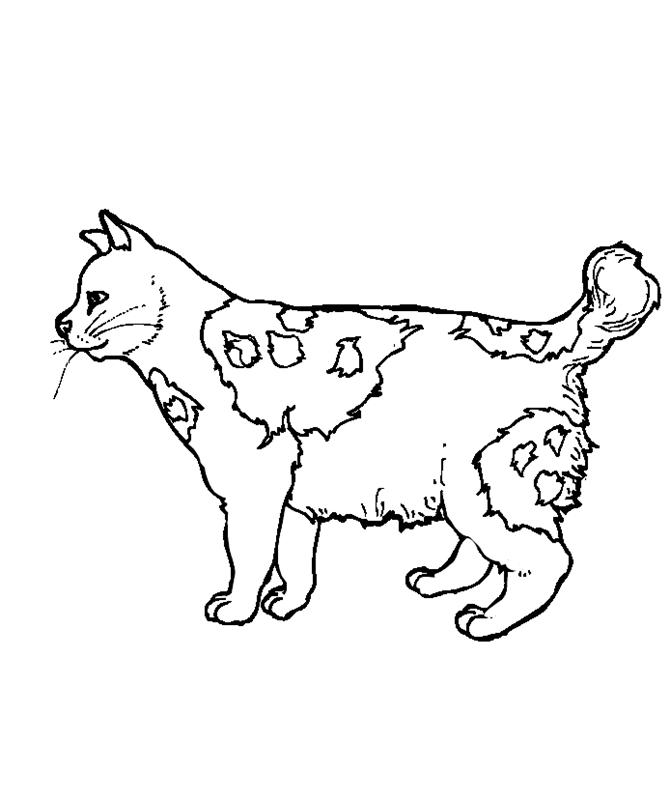 katzen00650 gratis malvorlage in katzen tiere  ausmalen