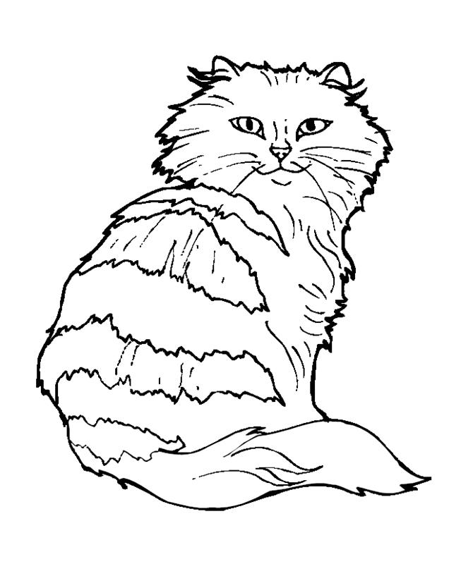 katzen00651 gratis malvorlage in katzen tiere  ausmalen
