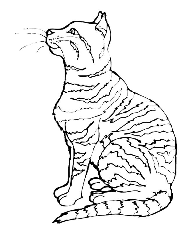 katzen00661 gratis malvorlage in katzen tiere  ausmalen