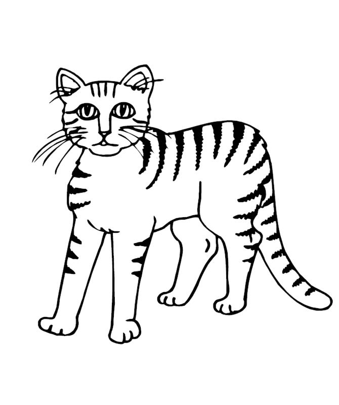 katzen00694 gratis malvorlage in katzen tiere  ausmalen
